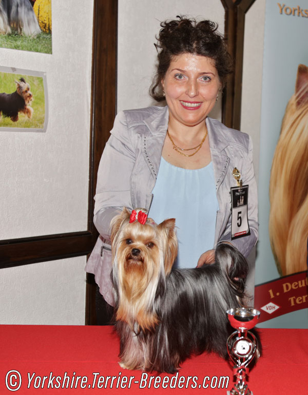 Special Yorkshire Terrier Show In