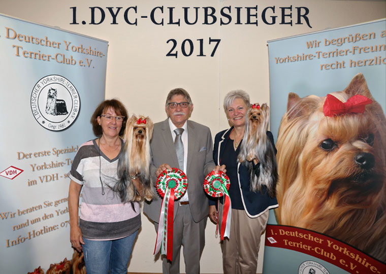 1.DYC yorkshire Terrier Club